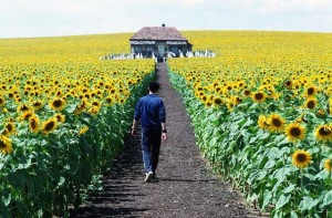 Everything Is Illuminated (2005) by Liev Schreiber - Unsung Films